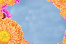 Free Summer Flower Frame Stock Photos - 5463953