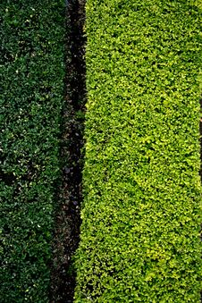 Dark And Light Green Grass Background Stock Image