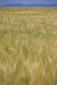 Free Green Field With Blue Strip. Royalty Free Stock Photos - 5464628