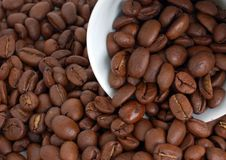 Free Coffee Beans Royalty Free Stock Photography - 5464827