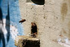 Free Beehive Stock Photos - 5466313