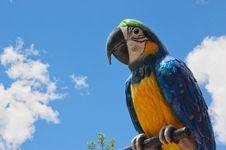 Free Blue And Gold Macaw (Ara Ararauna) Stock Photos - 5466343