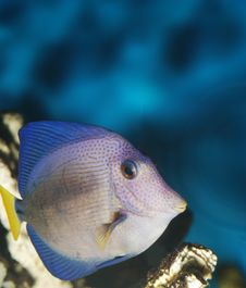 Free Exotic Fish Royalty Free Stock Photos - 5467268