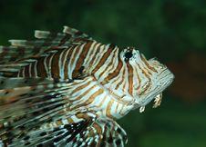Exotic Fish Stock Photos