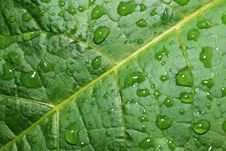 Free Drops On A Leaf Royalty Free Stock Photography - 5467307
