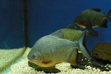 Free Fish Royalty Free Stock Photography - 5467397
