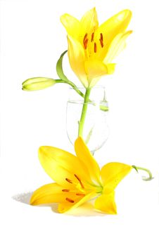 Free Yellow Lilies Royalty Free Stock Images - 5467769