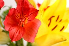 Free Bouquet Of Lilies Stock Photo - 5468070