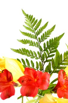 Free Lilies And Fern Leaves Royalty Free Stock Images - 5468089