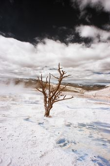 Free Yellowstone Terraces, Infrared Royalty Free Stock Photography - 5468837