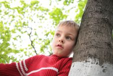 Free Boy And Tree Royalty Free Stock Image - 5469616