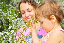 Free Mother And Daughter Look On Blossom Cherry Stock Photography - 5469772