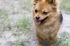 Free A Docile Dog Stock Photo - 5469970