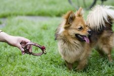 Free A Docile Dog Stock Images - 5469984