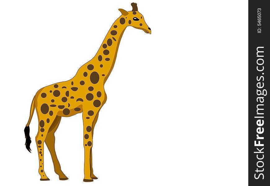 Giraffe standing tall