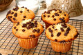Free Chocolate Chip Muffins Royalty Free Stock Image - 5470446