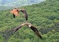 Free Two Kites Royalty Free Stock Image - 5471246