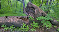 Free Rotting Log Stock Photography - 5474932
