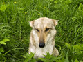 Free Dog In Grass Royalty Free Stock Photos - 5475468
