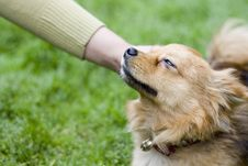 Free A Docile Dog Stock Photo - 5470060