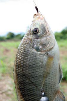Free Fishing Stock Image - 5470391