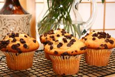 Free Chocolate Chip Muffins Royalty Free Stock Images - 5470459