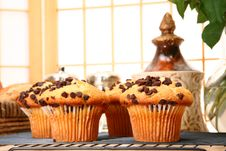Free Chocolate Chip Muffins Stock Photography - 5470492