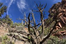 Free Zion Canyon Landscape Royalty Free Stock Image - 5471346