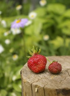 Free Ripe Berries Of A Strawberry Royalty Free Stock Photos - 5471748
