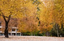 Free Park In Autumn Colours Royalty Free Stock Photography - 5473037