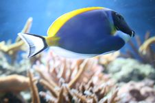 Free Tropical Fish Royalty Free Stock Images - 5473299