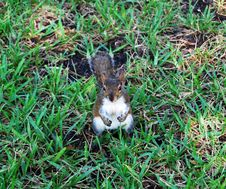 Free Curious Squirrel Stock Photo - 5474030