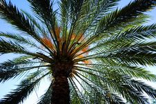 Free Palm Touching The Sky Royalty Free Stock Photo - 5474075