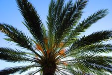 Free Palm Touching The Sky Stock Images - 5474094