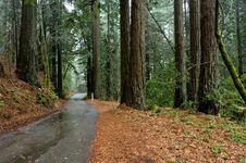 Free Road Through The Redwoods Stock Image - 5474571