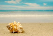 Free Conch Stock Photography - 5475272
