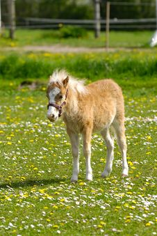 Free Foal Royalty Free Stock Image - 5475426