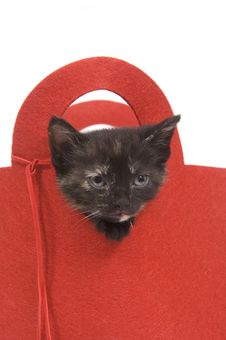Free Kitten In A Red Bag Royalty Free Stock Images - 5475579