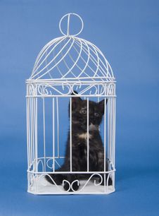 Free Kitten In A Cage Stock Images - 5475584