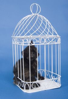 Free Kitten In A Cage Royalty Free Stock Image - 5475586