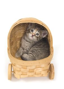 Free Kitten In A Basket Royalty Free Stock Photo - 5475595