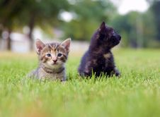 Free Kitten Playing In The Grass Royalty Free Stock Images - 5475609