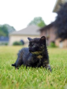 Free Kitten Playing In The Grass Royalty Free Stock Image - 5475616