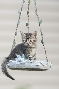 Free Tabby Kitten In A Birdfeeder Royalty Free Stock Images - 5475629