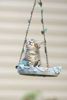 Free Tabby Kitten In A Birdfeeder Stock Image - 5475631