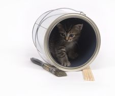 Free Kitten In A Paint Can Royalty Free Stock Images - 5475639