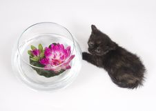 Free Kitten Trouble Stock Photography - 5475652