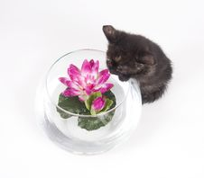 Free Kitten Trouble Stock Photos - 5475653