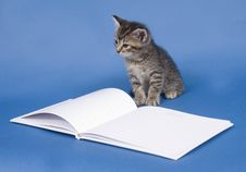 Free Kitten With Guest Book Stock Photo - 5475670