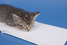Free Kitten With Guest Book Stock Photos - 5475673